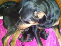BABIES ARE here 7boys and 5 girls breed Between Vegas