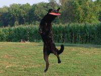 I have 2 AKC reg German Shepherd females one black and