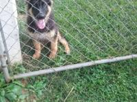 I have a female German Shepherd who is 5 months old.