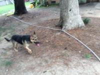 I have a AKC registered German shepherd female. She is