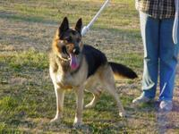 He is AKC registered and is 3 years old , a good