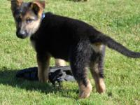 Pups are b/r/t 9wks old male and female. Males have