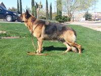 COOME ON DOWN AND CHECK OUT OUR BEAUTIFUL AKC GERMAN