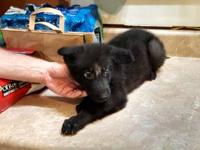 This is an update of the puppies that are available. We