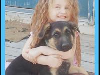AKC German Shepherd Puppies. Born Feb 25 One girl and