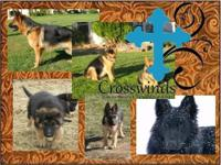 Crosswinds now has puppies available. We are a family