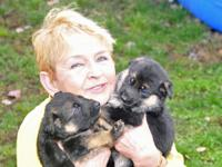 German line of german Shepherd Pups, blck & Red.