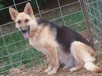I have 2 adult German Shepherds, a male and a female.