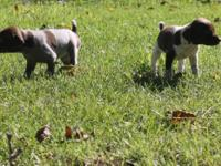Heavy Crosswind reproduced dogs 7 ladies 2 males born