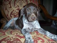 We have a liver roan colored german shorthaired pointer