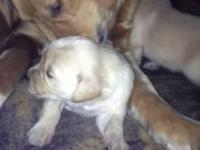 Puppies born on May 12,2013(Mother's day!) Ready to
