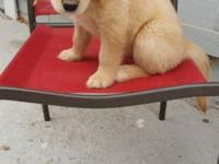 one male puppy left looking for his forever loving