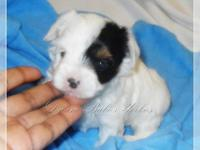 New pictures taken at over 4wks old! This sweetie is