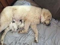 Litter of 10 born May 31, 2014. We have 7 dogs still