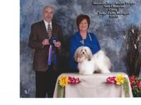 I will be having two beautiful AKC Havanese litters in