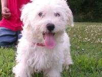 I have a white male havanese waiting for his new home,