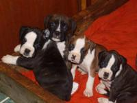 WE ARE A SMALL FAMILY OWNED BREEDER WHO BREED BECAUSE