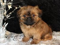 I have beloved Shih Tzu puppies that are ready to go to