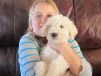 AKC signed up Komondor young puppies! Born 11/22/2014,