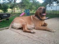 Deisel is looking for a furever home. He is an AKC