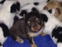 Puppies are 4 weeks old and now taking deposits to hold