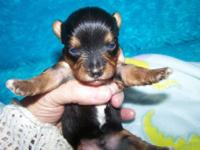 I have one male readily available. Born upon Jan. 23,