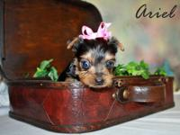I have five little male yorkies with AKC papers. They