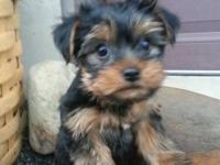 I have two beautiful AKC male puppies. They will be