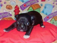 One little girl left! Midnight is a Black and White