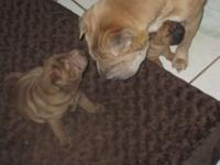 I have 2 puppies for sale, one male and one female,