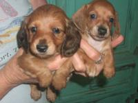 THESE PUPS ARE SOLD...PLEASE CHECK OUT OUR WEBSITE FOR