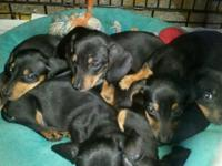 I have trash of Puppies for sale ... These cute little