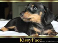 AKC Registered 1Black & Tan Smooth Male($450), 2 Black