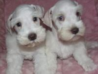 BEAUTIFUL QUALITY LITTER OF 4, 3 STILL AVAILABLE,RAISED