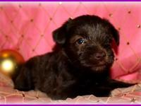 This precious little girl is Adelina. She is an AKC