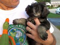 Dear Future Puppy Parent, We had 5 adorable AKC