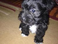 I have ONE puppy. It is a male. He is black with white