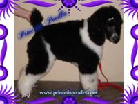 Check out our website at: www.princetinpoodles.com for