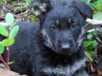 CALL FOR FUTURE LITTER INFORMATION AKC CHAMPION