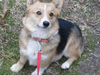 I have a litter of AKC Corgi Puppies born Sept-6 and