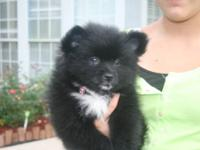 I have a cute lil girl she is 12 weeks old, Shes black
