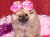 I have one GORGEOUS little girl left available. CH