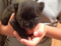 AKC Max is a little and distinctly marked  black and
