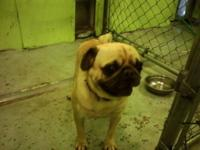 we have a male pug that we are looking to rehome we