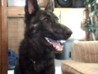 ZACK IS A BEAUTIFUL DOG, PLAYFUL AND GENTLE, KNOWS