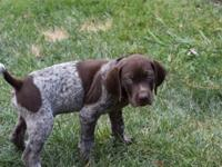 We have 3 females and 2 male akc registered puppies