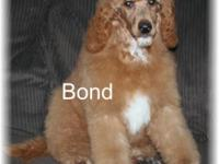 Hi..my name is Bond..I am looking for my furever home,