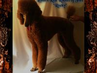 Sire: Dark Mahogany red color Dam: Dark orange red