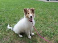 Sadie is a gorgeous one year old puppy for sale to a