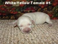 We have 2 white/very light yellow & 1 yellow Female in
